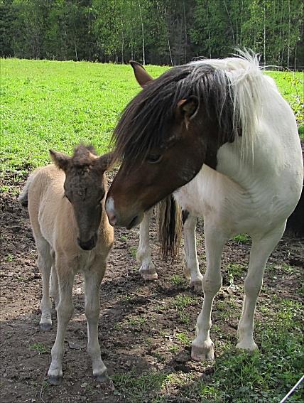 Eyja och Dottla 2011